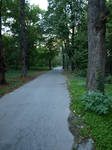 Path woods 01 by dreamlikestock