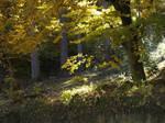 Autumn trees by dreamlikestock