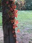 Autumn set 21 by dreamlikestock