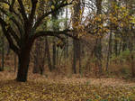 autumn trees 05 by dreamlikestock