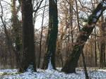winter trees 04 by dreamlikestock