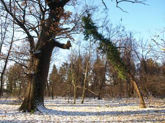 winter trees 05 by dreamlikestock