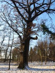 winter trees 08 by dreamlikestock