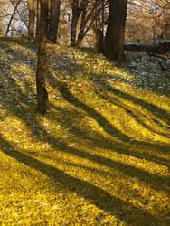 beautiful shadows by dreamlikestock