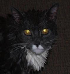 golden eye by zen-master-gone-bad