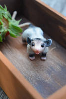 Opossum Vinsent. Poseable doll by SulizStudio