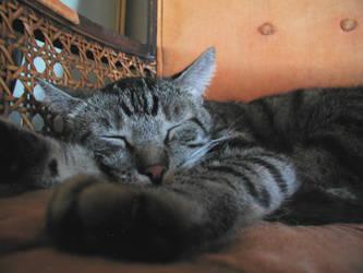 Rex Napping 1 by edwardvb