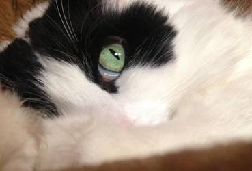 Rascal's Eye by edwardvb