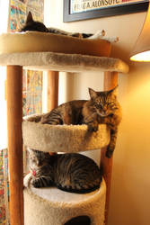Three Cats In A Condo by edwardvb