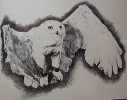 Snowy Owl by Inquisitive-Soul