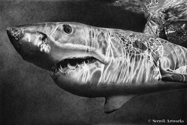 Carcharodon carcharias by SerreliArtworks