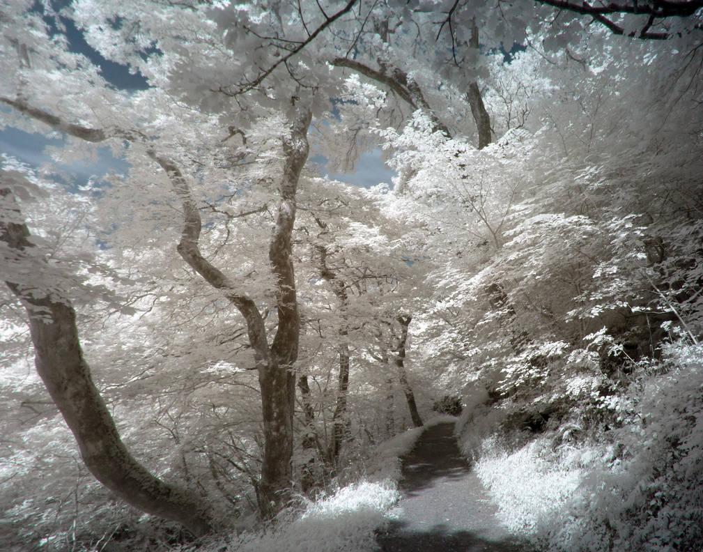 Eerie Path by yaschaeffer