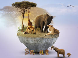 Safari by doclicio