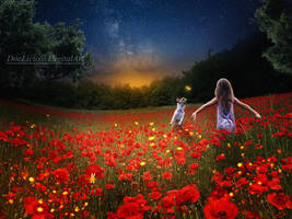 Poppies and fireflies by doclicio