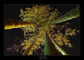 - Bamboo - by avotius