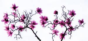 spring 2010 by cenevols