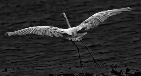 fly away by cenevols