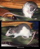 my rat - Suit by littleyuji
