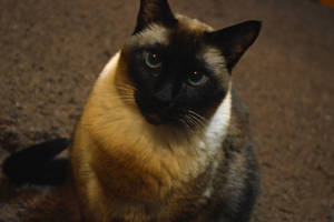 Abe (My Cat) by H-R-Germaine