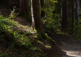alpbach forest by mithni