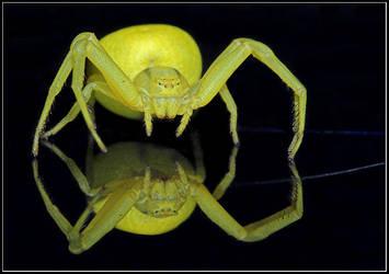 Spider by JasenkaLuksa