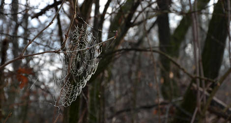 web by i-bex