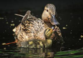 Best Mom Ever by plumita1