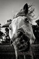 Crazy horse by mr-kreciu