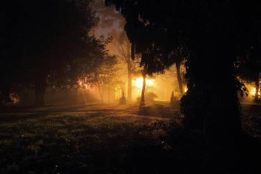 Enchanted Wood by ChrisDonohoe