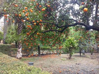 Oranges by Magrat90