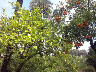 Paradise garden by Magrat90