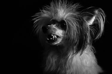 Teeth by Karnoffel