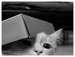 Sonny Box by metalifreak
