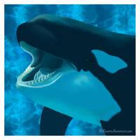 Orca by Liuanta