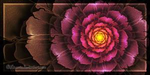 Rose for Peggi by Liuanta