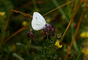 ..:::Hope never Die:::.. by Angie-AgnieszkaB