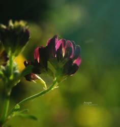 Dream of Glory by Angie-AgnieszkaB