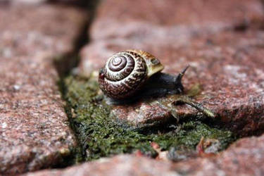 sir snail by photog-road