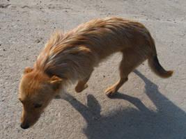 Stray dog 0.1 by wolfkART