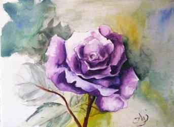 rose by kaikoshi
