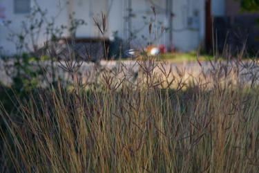 Tall Grass by AlienMonkey
