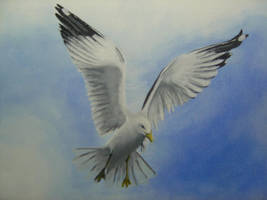 seagull by Dealvith
