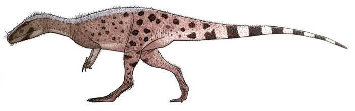 Eustreptospondylus skulkin about by ZEGH8578