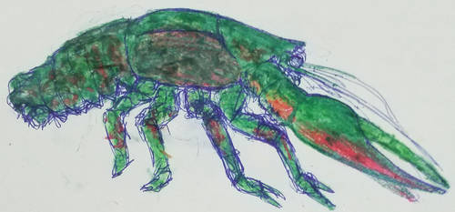 crustacean world: the first land crayfish by Parazit2016
