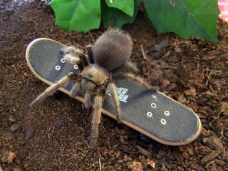 Tarantulas are nasty by RacieB