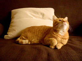 Red cat on brown sofa by YaLis