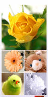 flowers and ani- toys by YaLis