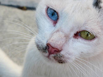 Green - blue eyed by fmlavita