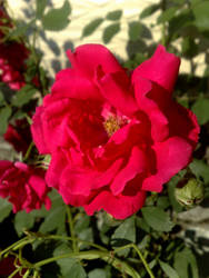 Flowers 43 by XoN1