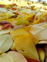 Autumn by XoN1